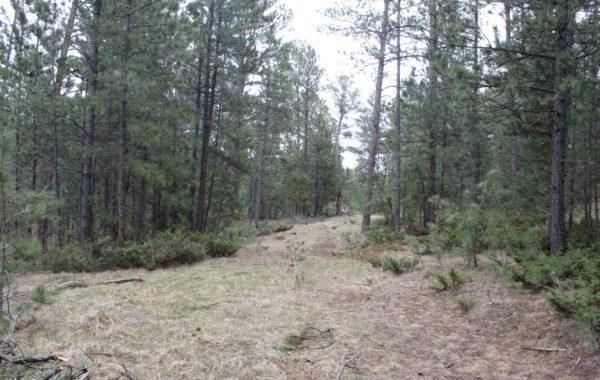 85 North ~ 21.36 acres