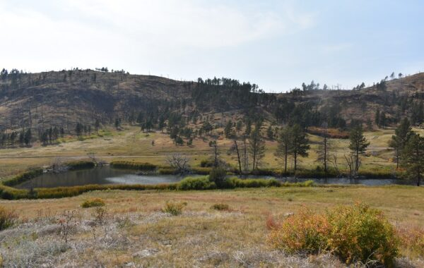 93 + Acres Big Plum Creek